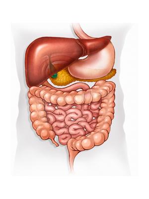 средство от кишечных паразитов
